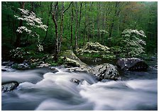 Middle Prong of the Little River,  Great Smoky Mountains National Park.  ( )