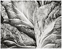 Brussel Sprout Leaves, 1979.  ( )